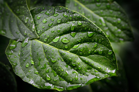 conservation: Fresh Green Leaves Growth Rain Drops Spring Growing