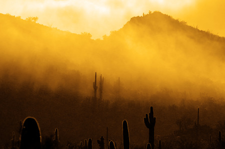 Misty morning in desert with cactus cacti in Arizona wilderness Stock Photo - 78828469