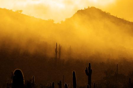Misty morning in desert with cactus cacti in Arizona wilderness Banco de Imagens - 78828469