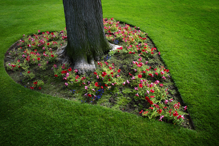 Heart Shaped Garden Around Tree in Park Green Grass