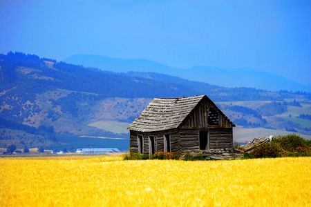 Cabine ancienne ferme sur un terrain agricole avec champ de céréales
