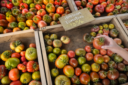 Hand holding fresh ripe heirloom tomato at farmers market garden produce for sale