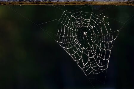 Spider web with drops of dew hanging from wood railing against a dark background Banco de Imagens