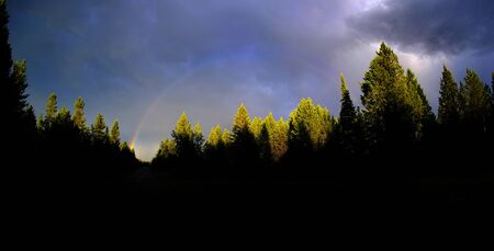 Mountain thunderstorm raining in pine tree forest with rainbow in distance Banco de Imagens