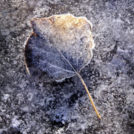 Frozen autumn leaf with details of frost