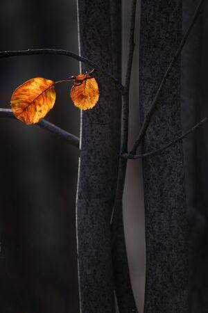 Bright fall leaves on dark trees