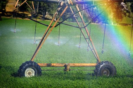 Sprinkers irrigating crops green lush field farming grains water spraying rainbow from mist misty Banco de Imagens