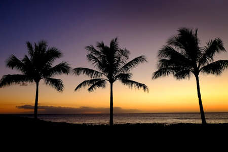 Palm trees silhouetted against sunset with ocean in background Banco de Imagens