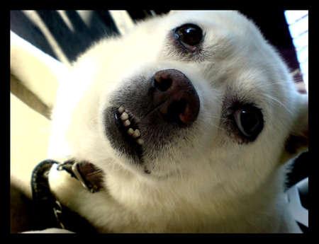Puppy Dog Banque d'images