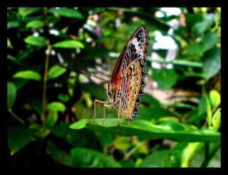 Butterfly 02