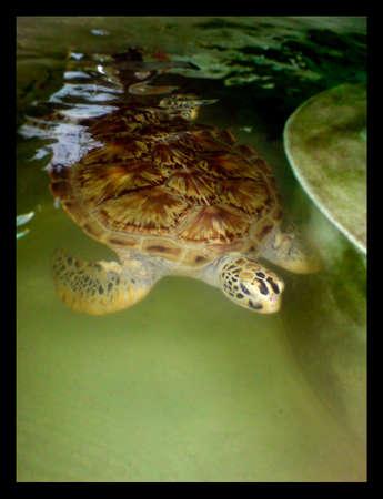 tortue de mer Banque d'images