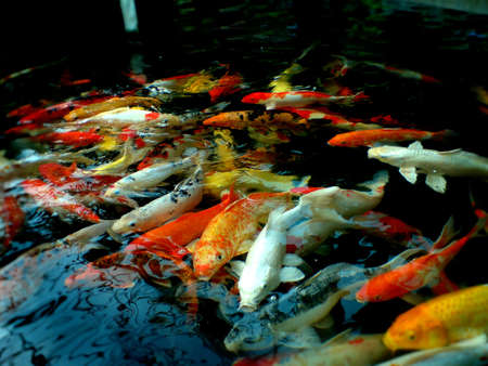 De nombreux poissons dans le lac Banque d'images