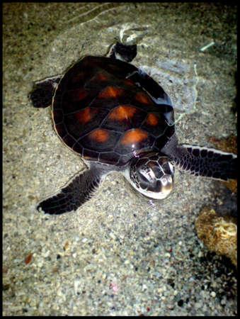 02 tortues de mer Banque d'images