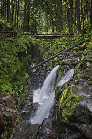 A footbridge spans Sol Duc Falls in Olympic National Park, Washington USA. photo