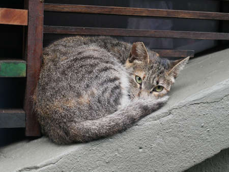 A cute cat on the fence.