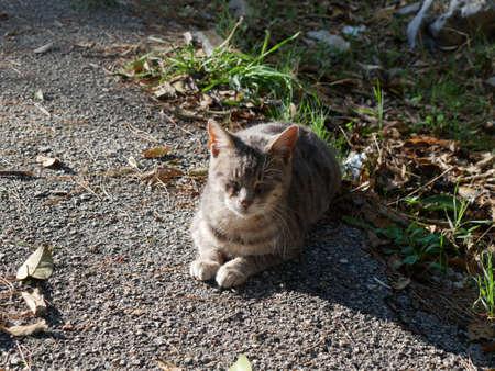 Cute cat in Croatia