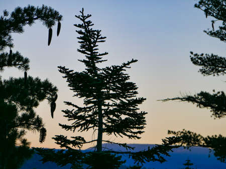 Lake Tahoe Sunrise Through trees Dl Bliss State Park