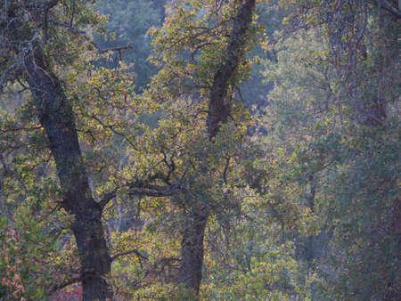 Light filtering through trees last summer days Фото со стока
