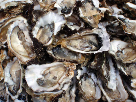 Close up of oysters, half shells, seafood, at a farmers market in San Francisco