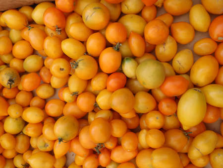 Bunch of Yellow-orange Tomatoes at a farmers market in San Francisco California       photo