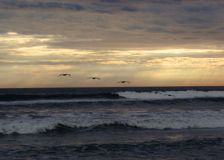 Birds fly across ocean waves during a cloudy sunset. Pacific coast, Mexico photo