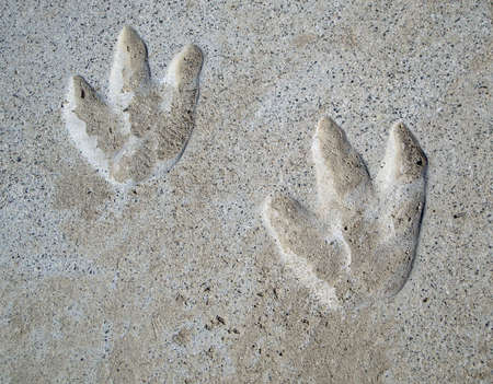 School playground, couple of year old Dinosaur tracks in cement
