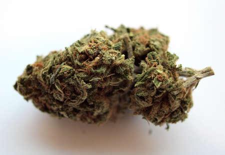 Close up of a nug of Kimber agianst a white background, California Medical Marijuana  Archivio Fotografico