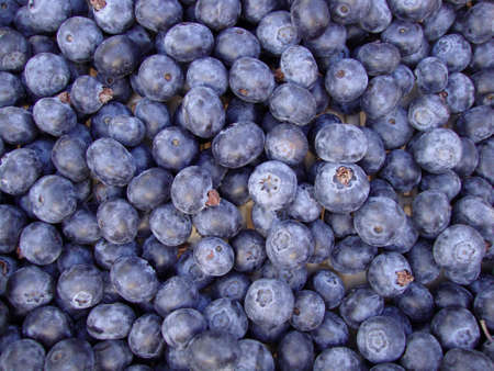 Organic Blueberries on display at a farmers market in San Francisco Stock Photo - 7454848
