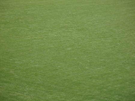Well groomed professional Baseball Field Grass Stock Photo - 8306296