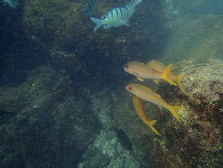 Variety of Tropical fish swim by reef in Hanauma Bay on Oahu, Hawaii. photo