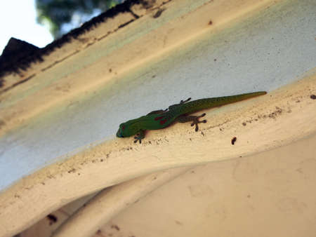 Gecko climbs on side of white structure photo