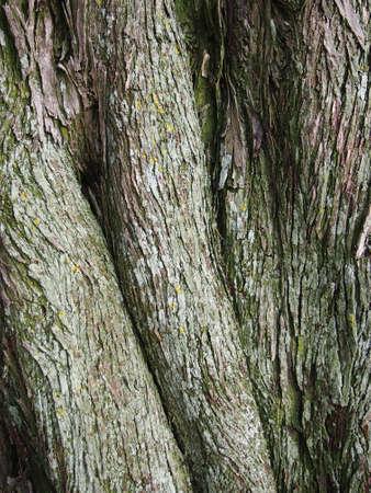 Curvy tree bark with green shade and yellow dots Stock Photo - 17096551