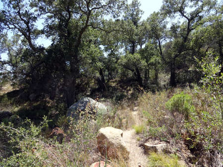 Small dirt trail with rocks in the dry forest in the Hills of Santa Barbara, California                                 Stock Photo - 18154014