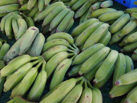 Bunches of Green Bananas for sale at Kapiolani Community College Farmers Market Stock Photo - 18153360