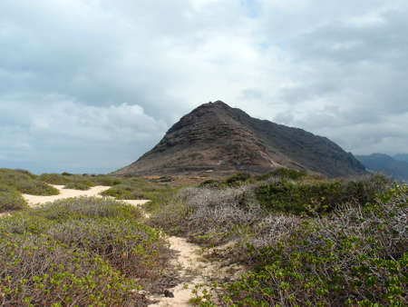 Sand trail at Kaena Point on the island of Oahu, Hawaii   With lots of native Naupaka Kahakai plant vegetation surrounding the area  Stock Photo - 18153558