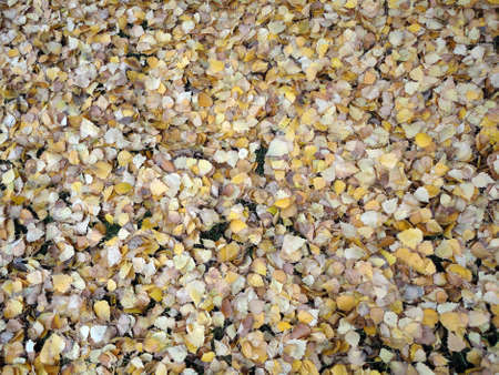 Tons of Fall leafs lay on top of grass  Stock Photo - 18153991