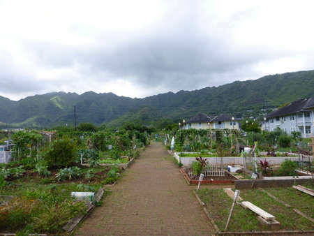 Manoa Community Garden in Manoa Valley on Oahu, Hawaii  On an overcast day  Stock Photo - 18147558