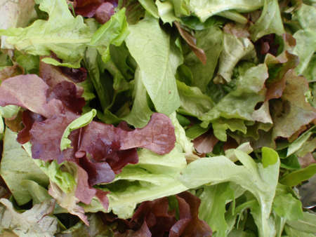 Spring Leaf Lettuce on display at farmers market in San Francisco, California Stock Photo - 18153353