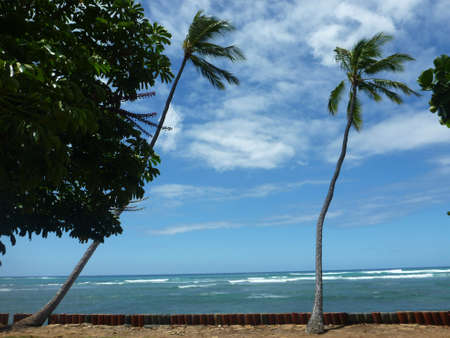 Coconut trees hang over red cylinder stones along cliff shore next to shallow ocean waters of Waikiki looking into the pacific ocean at Leahi Beach Park on Oahu, Hawaii on a beautiful day.