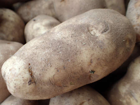Russel Potatoes on display at Farmers Market in Maui. photo