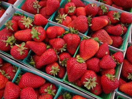 Strawberries displayed in square light blue plastic baskets at a farmers market in San Francisco, California. photo