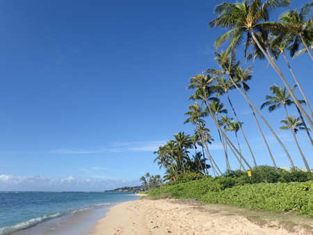 Coconut Trees and napakaa plants line Kahala Beach with sparse clouds on a beautiful day on Oahu, Hawaii.  October 2014. Stock Photo