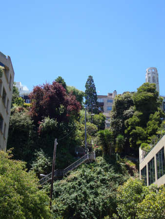 coit: Staircase up Telegraph Hill leading up to Coit Tower though buildings and trees in San Francisco, California.