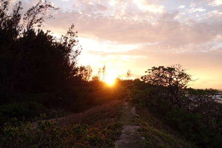 north shore: Sunset through the trees along a dirt path by the ocean on the North Shore of Oahu.
