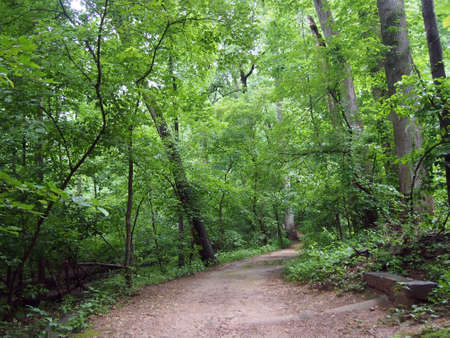rock creek: Dirt Path leading downwards in Forest in Rock Creek Park, Washington DC. Stock Photo