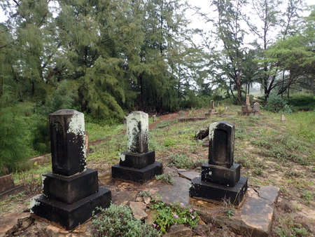 ironwood: Overgrown Historic Wet Graveyard among ironwood trees on a cloudy day on Maui. Stock Photo