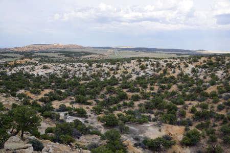 San Rafael Swell: Tree on the San Rafael Swell with Highway in the distance in Utah.