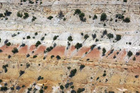 san rafael swell: Close-up of bushes and Trees on sheer cliff on the San Rafael Swell in Utah.