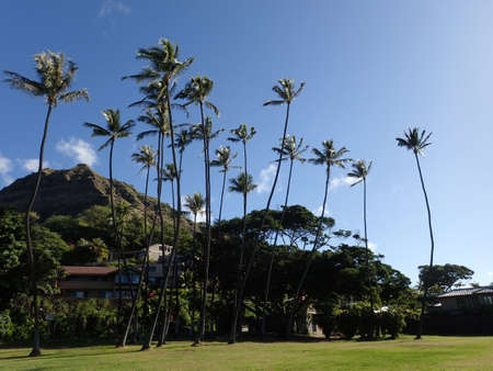 diamond head: Tall Coconut trees and grass field at Leahi Beach Park with Nice homes and iconic Diamond Head Crater in the background on Oahu, Hawaii on a beautiful day.
