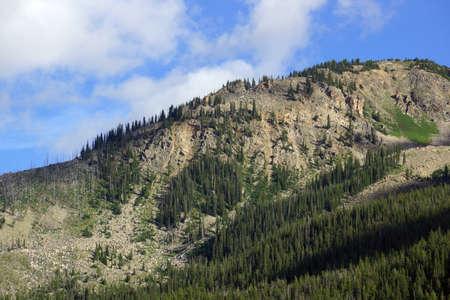 independencia: �rbol verde en la Monta�a de la Independencia Pass con nubes por encima, Colorado.